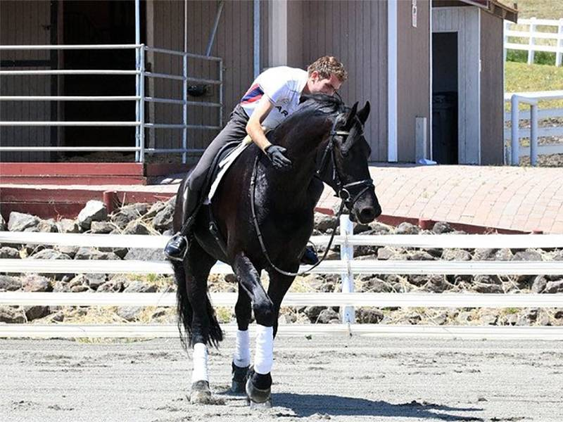 Tim Kruyt Quality horses fries paard