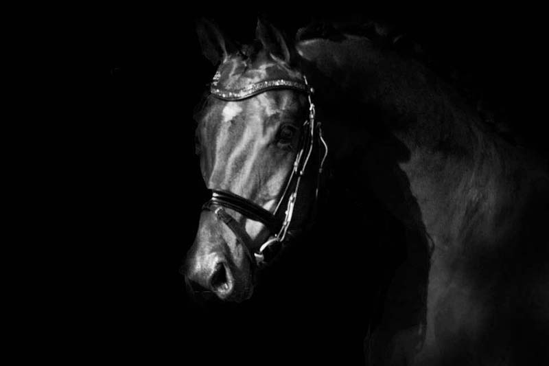 Quality Horses Kruyt